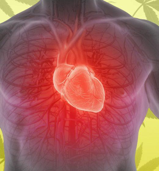 Kalp Hastalığı için CBD Tedavisi