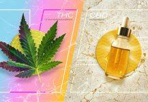 THC Nedir? THC ve CBD Arasındaki Farklar Nelerdir?